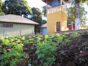 A horta comunitária é uma das atividades desenvolvidas no local.
